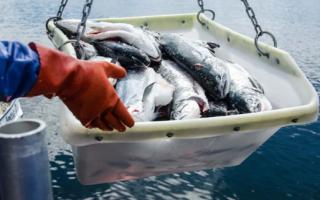 Финская рыба – где купить и как выбрать