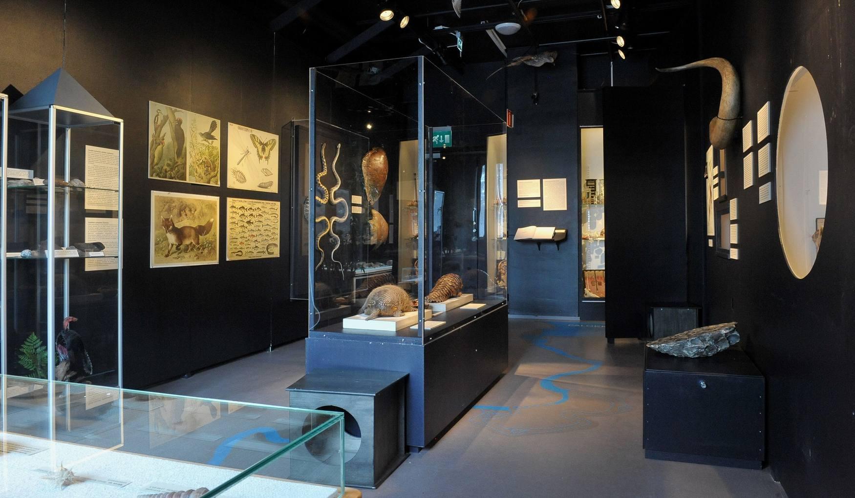 Музей природы Центральной Финляндии